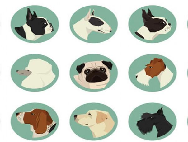 Nom d'un chien (diversité)